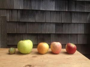 Apples2014_SM