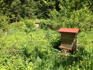 apiary_old_SM