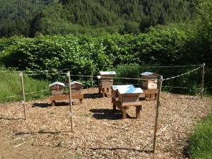 apiary_newSM