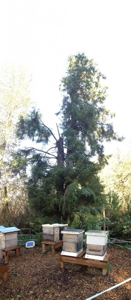 treefall3