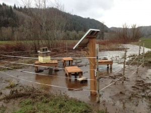 flooded apiary_sm