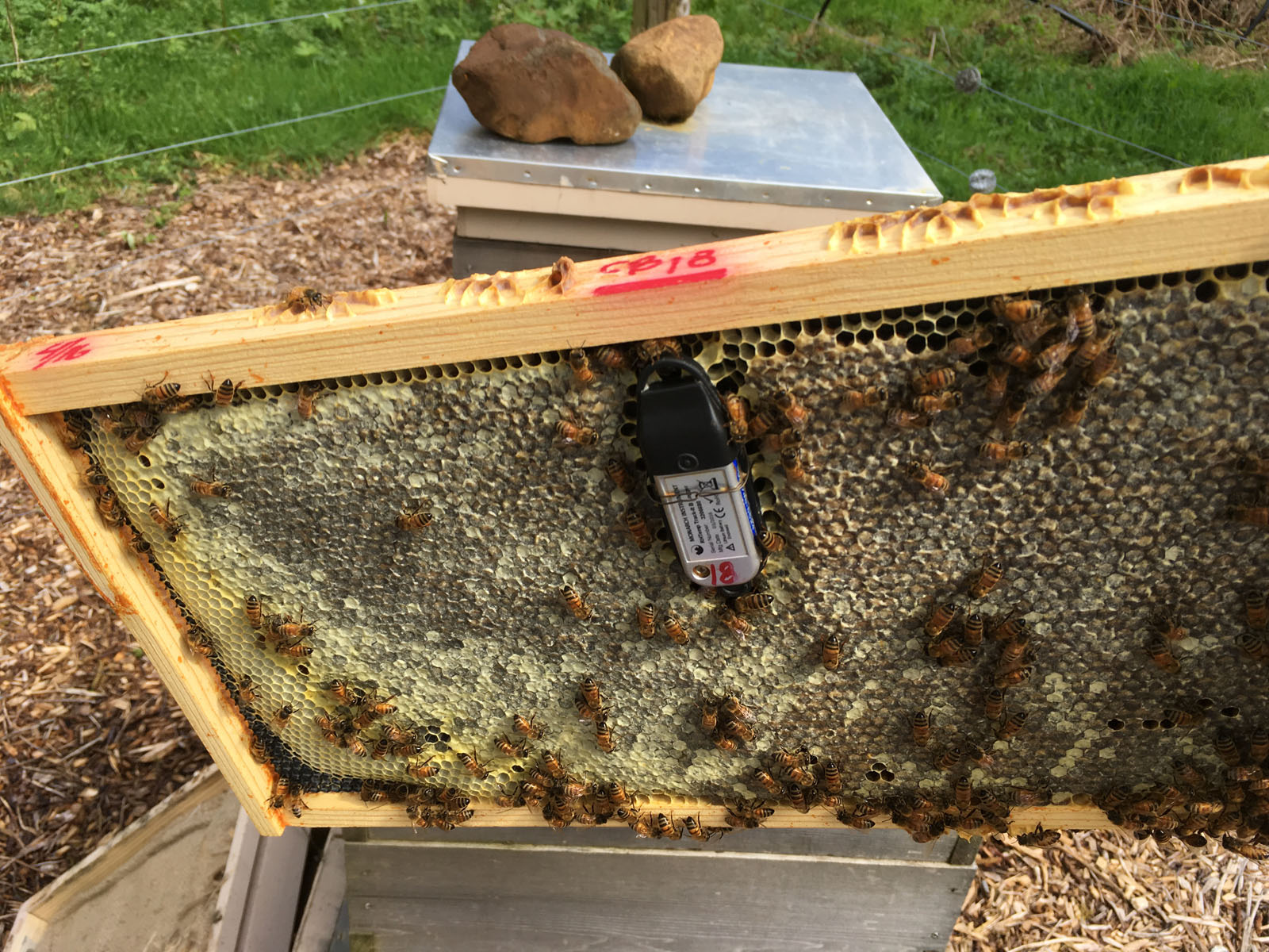 Spring is here, and the bees have awoken from their long winter's nap. April 1 was the official end for the data recording period for the Cozy Bee Project.